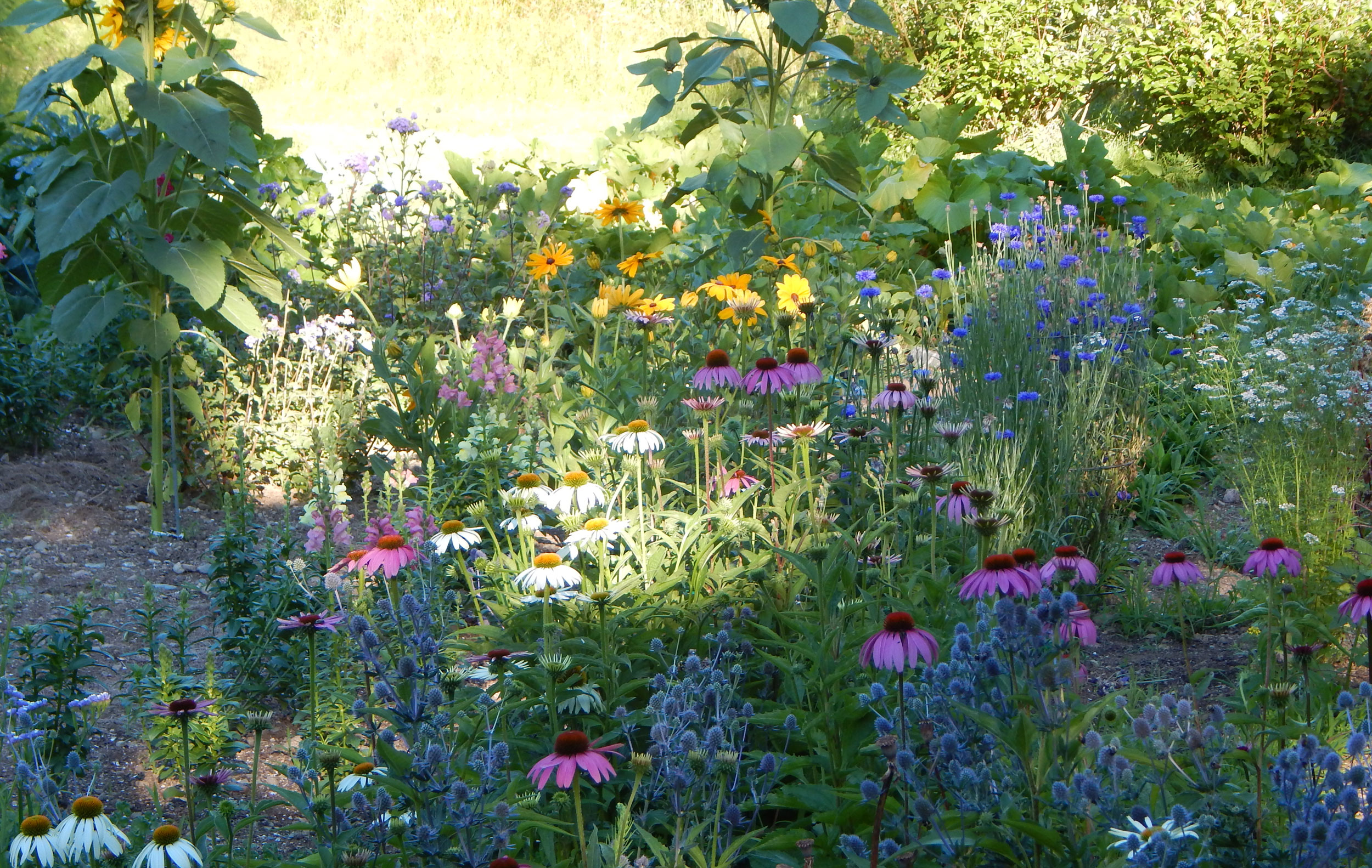 Cottage flowers cutting gardens in otter creek maine